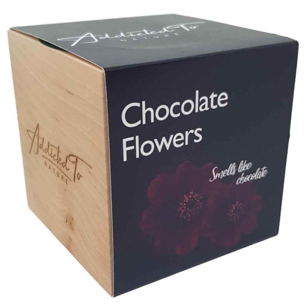 planting-chocolate-flowers-with-easy-manual
