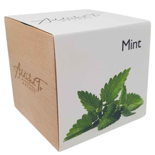 plant-in-a-wooden-cube-mint