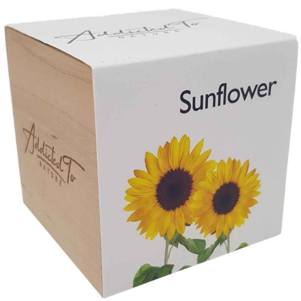plant-in-a-wooden-cube-sunflower